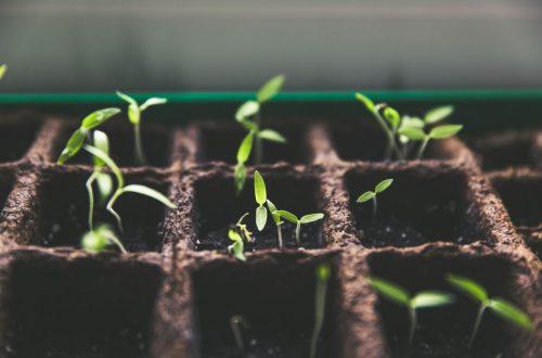 Growing Plants & Seeds